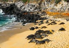 πράσινες της Χαβάης χελών&epsil Στοκ φωτογραφία με δικαίωμα ελεύθερης χρήσης