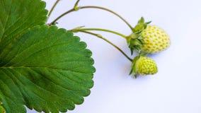πράσινες φράουλες Στοκ εικόνα με δικαίωμα ελεύθερης χρήσης
