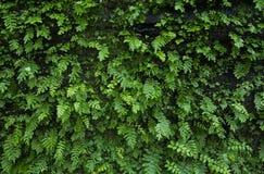 Πράσινες φτέρες που αυξάνονται στο βράχο στοκ φωτογραφίες