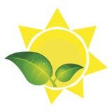 Πράσινες φυσικές εγκαταστάσεις δέντρων φύσης φύλλων απεικόνιση αποθεμάτων