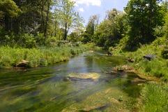 Πράσινες χλόες ενός ρεύματος βουνών το καλοκαίρι στοκ φωτογραφίες
