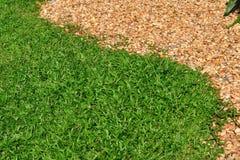 Πράσινες χλόες και μικρή πέτρα που χωρίζονται Στοκ φωτογραφία με δικαίωμα ελεύθερης χρήσης