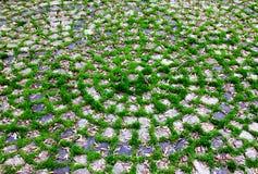 Πράσινες χλόες και πέτρες Στοκ φωτογραφία με δικαίωμα ελεύθερης χρήσης