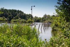 Πράσινη, άκοπη χλόη στην ακτή μιας δασικής λίμνης στοκ εικόνα