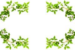 Πράσινη άκρη άδειας Στοκ φωτογραφίες με δικαίωμα ελεύθερης χρήσης