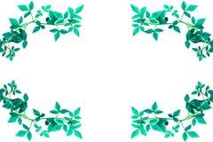 Πράσινη άκρη άδειας Στοκ Εικόνες