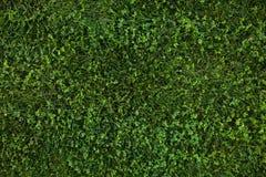 Πράσινη άνευ ραφής σύσταση χλόης αφηρημένη ανασκόπησης πόλεων όψη σύστασης πάρκων χορτοταπήτων χλόης πράσινη Στοκ Εικόνες