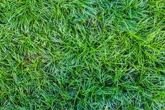 Πράσινη άνευ ραφής σύσταση χλόης Άνευ ραφής μόνο στα οριζόντια dimens Στοκ Εικόνες