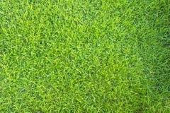 Πράσινη άνευ ραφής σύσταση χλόης Στοκ Εικόνες