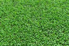 Πράσινη άνευ ραφής σύσταση χλόης Στοκ φωτογραφία με δικαίωμα ελεύθερης χρήσης