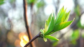 πράσινη άνοιξη λουλουδιών φιλμ μικρού μήκους