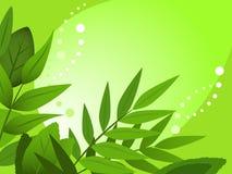 πράσινη άνοιξη Στοκ Φωτογραφίες
