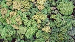 Πράσινη άποψη θερινών δασική εναέρια κηφήνων Γήινη ημέρα, προστασία του περιβάλλοντος απόθεμα βίντεο