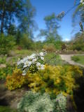 Πράσινη άσπρη κίτρινη μπλε φωτογραφία κήπων φωτός του ήλιου Στοκ φωτογραφία με δικαίωμα ελεύθερης χρήσης