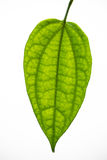 Πράσινη άδεια Στοκ φωτογραφία με δικαίωμα ελεύθερης χρήσης