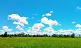 Πράσινη έννοια απείρου περιβάλλοντος μπλε ουρανού τομέων στοκ εικόνα