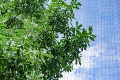 Πράσινη έννοια επιχειρησιακών γραφείων Στοκ Εικόνες