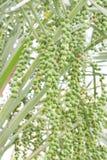 πράσινη ένωση ημερομηνιών στοκ φωτογραφία με δικαίωμα ελεύθερης χρήσης