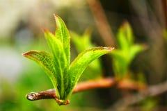 Πράσινη δέσμη Στοκ Εικόνες
