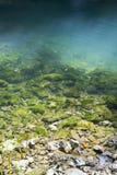 πράσινη δίνη Στοκ εικόνες με δικαίωμα ελεύθερης χρήσης