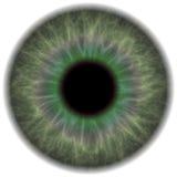 πράσινη ίριδα ματιών διανυσματική απεικόνιση