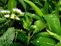 Πράσινη ακρίδα μωρών στοκ φωτογραφία με δικαίωμα ελεύθερης χρήσης