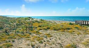 πράσινη ακτή Στοκ Εικόνες