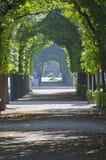 Πράσινη αλέα δέντρων Στοκ εικόνα με δικαίωμα ελεύθερης χρήσης