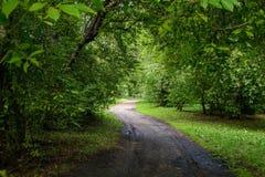 Πράσινη αλέα μια ηλιόλουστη ημέρα Στοκ εικόνες με δικαίωμα ελεύθερης χρήσης