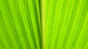 Πράσινη ανάλυση φύλλων φιλμ μικρού μήκους