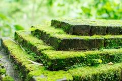 Πράσινη ανάπτυξη βρύου στην πέτρα Στοκ φωτογραφίες με δικαίωμα ελεύθερης χρήσης