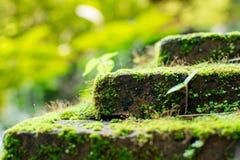 Πράσινη ανάπτυξη βρύου στην πέτρα Στοκ Εικόνα