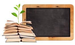 Πράσινη ανάπτυξη νεαρών βλαστών από τα ανοικτούς βιβλία και τον πίνακα κιμωλίας Στοκ Εικόνες