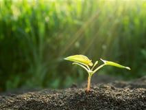 Πράσινη ανάπτυξη νεαρών βλαστών έξω από το χώμα Στοκ Εικόνες