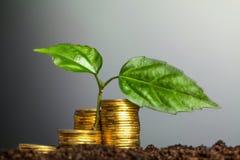 Πράσινη ανάπτυξη σποροφύτων από τα νομίσματα στο χώμα Η έννοια του MO Στοκ φωτογραφίες με δικαίωμα ελεύθερης χρήσης