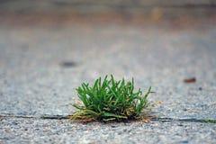 Πράσινη ανάπτυξη χλόης στην άσφαλτο Στοκ Εικόνες