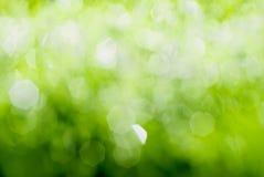 Πράσινη ανασκόπηση ανοίξεων Στοκ εικόνα με δικαίωμα ελεύθερης χρήσης