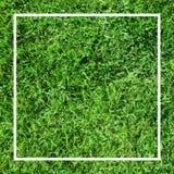 Πράσινη ανασκόπηση χλόης Έμβλημα ποδοσφαίρου Στοκ εικόνες με δικαίωμα ελεύθερης χρήσης