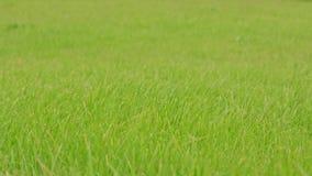 Πράσινη ανασκόπηση χλόης φιλμ μικρού μήκους