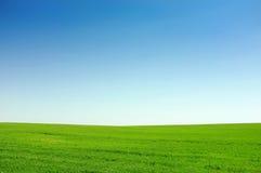 Πράσινη ανασκόπηση χλόης και μπλε ουρανού Στοκ Φωτογραφία