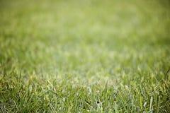 Πράσινη ανασκόπηση χλόης Στοκ Εικόνα