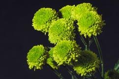 Πράσινη ανθοδέσμη χρυσάνθεμων στοκ φωτογραφία