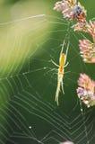 Πράσινη αράχνη που αναρριχείται στον ιστό αράχνης του που στηρίζεται στο λουλούδι Στοκ φωτογραφία με δικαίωμα ελεύθερης χρήσης