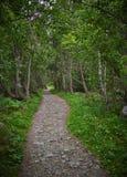Πράσινη δασική αλέα Στοκ Εικόνες