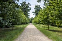 Πράσινη αλέα με τα δέντρα στο πάρκο Στοκ Εικόνες