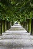 Πράσινη αλέα με τα δέντρα στο πάρκο Στοκ φωτογραφίες με δικαίωμα ελεύθερης χρήσης