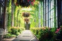 Πράσινη αλέα με τα λουλούδια που κρεμούν στα δοχεία Στοκ εικόνα με δικαίωμα ελεύθερης χρήσης