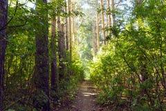 Πράσινη αλέα με το αγροτικό μονοπάτι Στοκ φωτογραφία με δικαίωμα ελεύθερης χρήσης