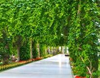 Πράσινη αλέα πάρκων σε μια ακροθαλασσιά Στοκ Φωτογραφία