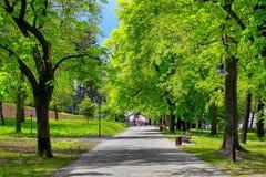 Πράσινη αλέα πάρκων Στοκ Εικόνες